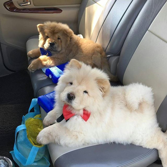 We are going for a ride.