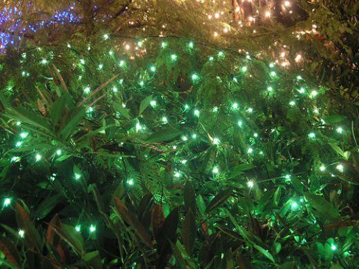 Green Christmas lights on branch