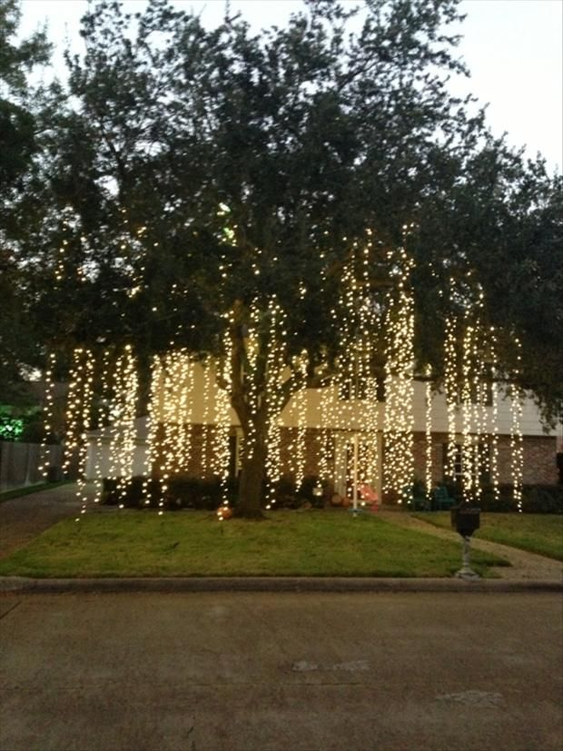 Raining lights how amazing would this look hanging from for How to hang string lights without trees