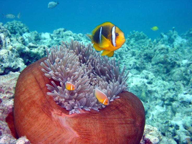 Hap's Reef Guam, April 2010: Reef Guam, April 2010, Amazing Creations, June 2012, Hap S Reef, God S Amazing, Dive Photography