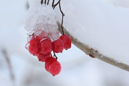 Ledu, Zimní Krajina, Příroda