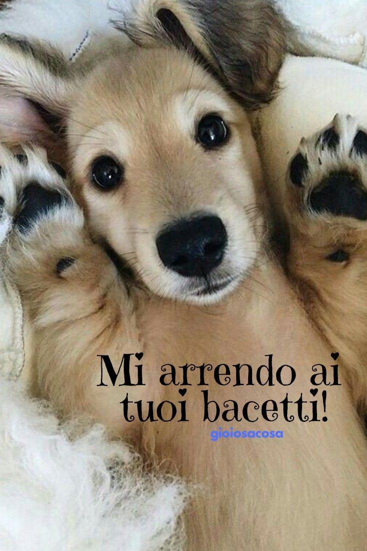Buongiorno cagnolini animali tenerezza mi arrendo a te for Lavorare con i cani