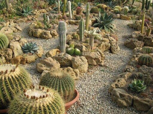 Le 25 migliori idee su giardino di piante grasse su - Idee piante da giardino ...