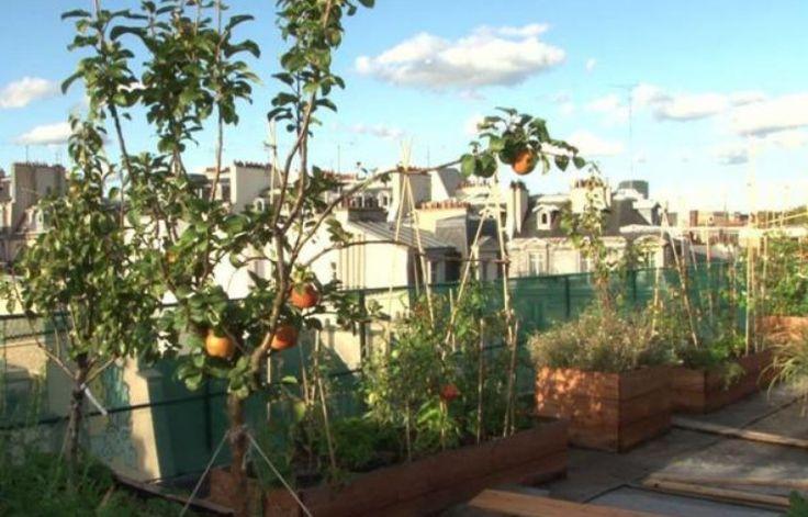 Tomates, pommes, fraises: sur le toit de l'école AgroParisTech, des passionnés ont créé un immense potager qui sert de laboratoire pour trouver la meilleure façon de cultiver en ville. https://www.google.com/url?q=http://www.20minutes.fr/planete/1352765-20140415-potager-ville-tendance-bobo-acte-politique&sa=U&ei=8tAWVNLvFsidyATb1IHADA&ved=0CAYQFjAA&client=internal-uds-cse&usg=AFQjCNH7HZwEjOFsfu9o4YSqCm37sV_96g
