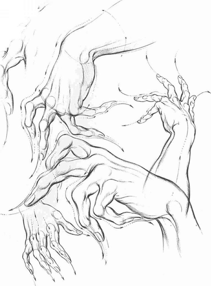 Hand analysis by Burne Hogarth, author of Dynamic Anatomy, and others