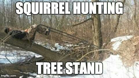Squirrel hunting tree stand.