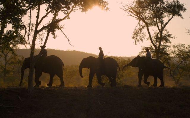 Elephant Whispers - Hazyview, Mpumalanga  http://www.africanwelcome.com/kruger-national-park/adventure-activities-kruger-national-park/elephant-whispers