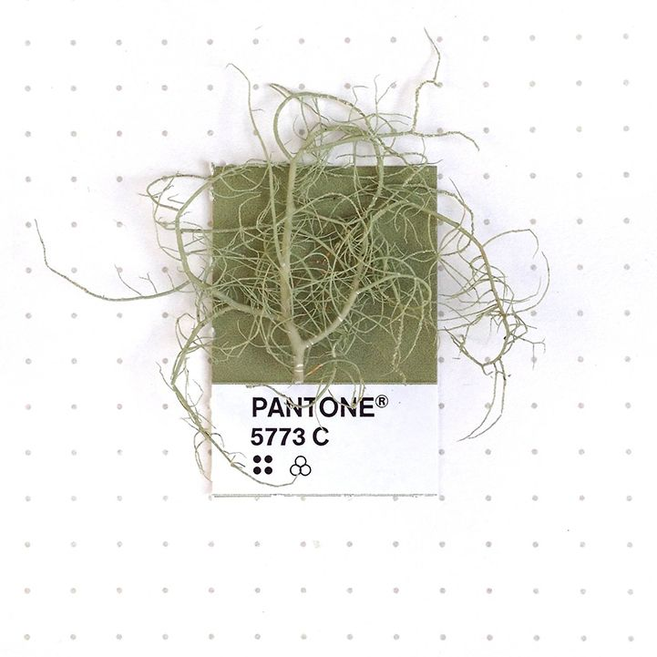 103 best u201c Tiny PMS Matchu201d·Petrichor images on Pinterest Color - sample pantone color chart