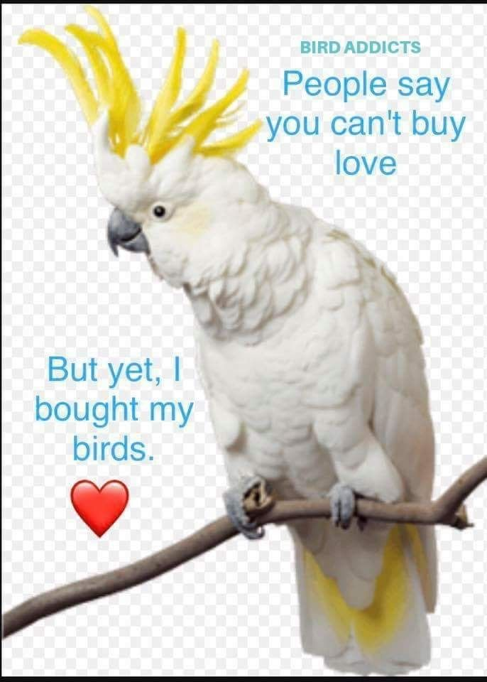 Pin By Liny On Adopt Rescue A Parrot Parrot Sayings Birds