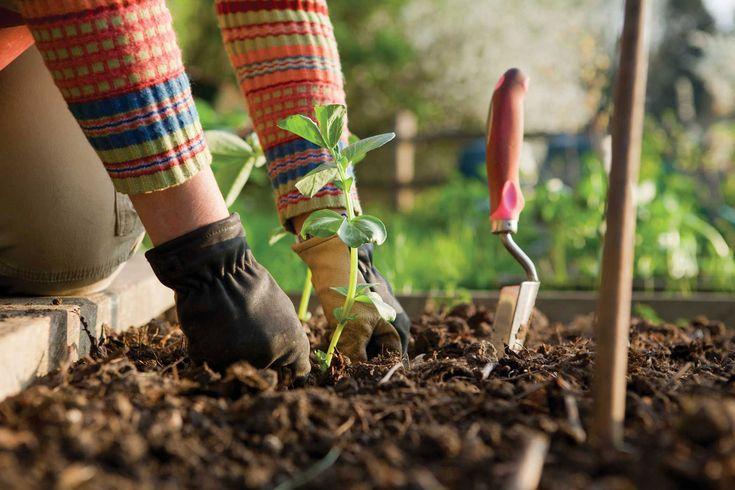 Slow Food Hareketine Katılmak için 10 Adım | Normal is Good