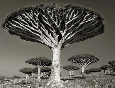Αυτά είναι τα πιο γέρικα δέντρα του κόσμου! Σε τρομάζουν ή σε ηρεμούν;