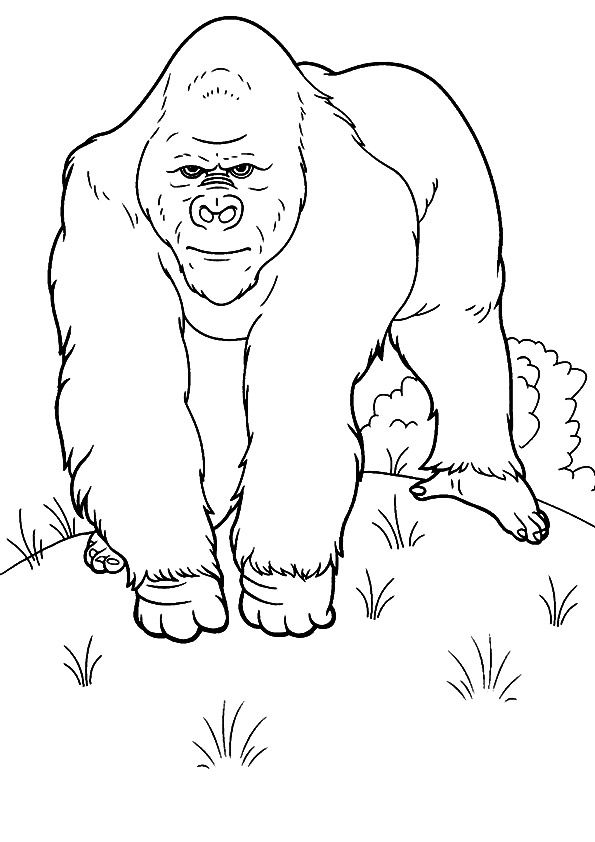 The Gorilla Trekking Animal Coloring Pages Detailed Coloring Pages Coloring Pages