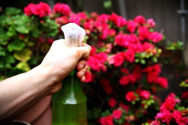 Homemade Rose Bush Spray