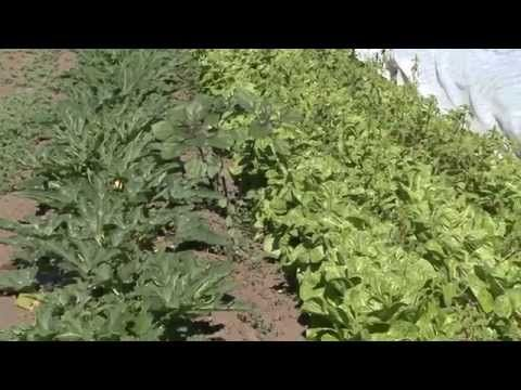 Major Study Documents Nutritional and Food Safety Benefits of Organic Farming | Washington State University - YouTube