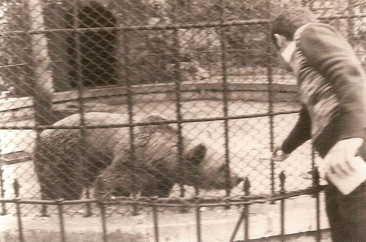 Resultado de imagen de Petra Y Perico los osos del Parque San Francisco
