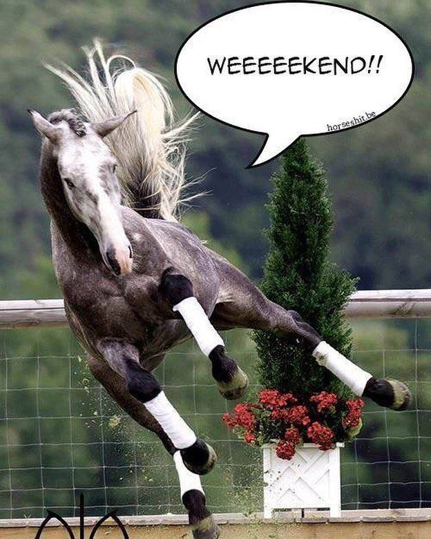 #erasmusrick #friday #horses