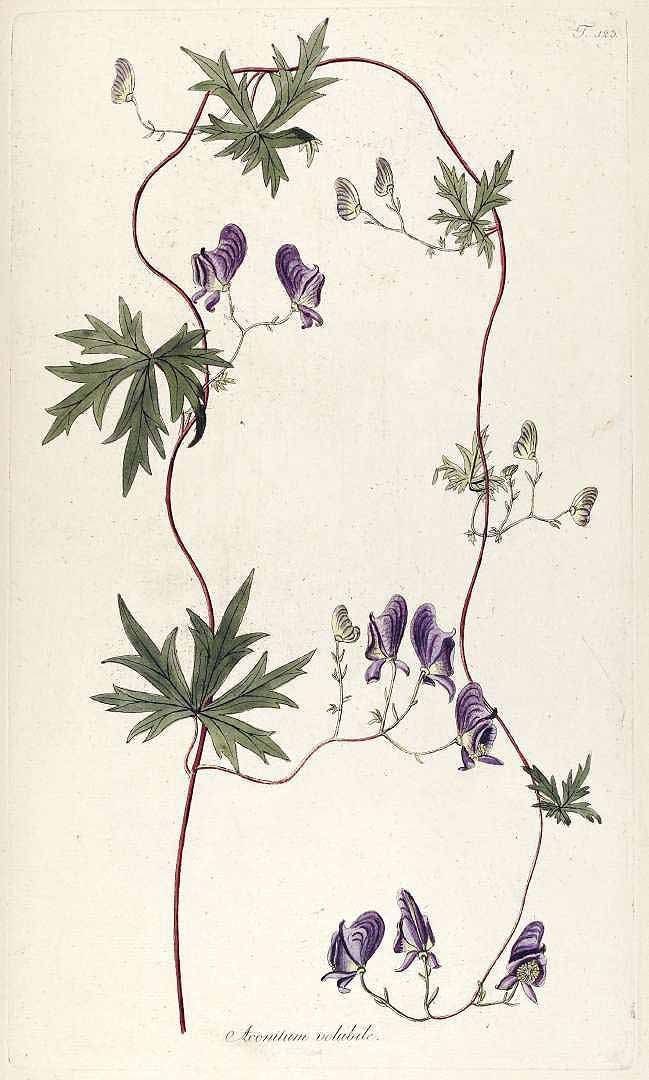 e114246bb4528a0abc135b05b82391e3--flower-vintage-botanical-illustration.jpg (649×1080)