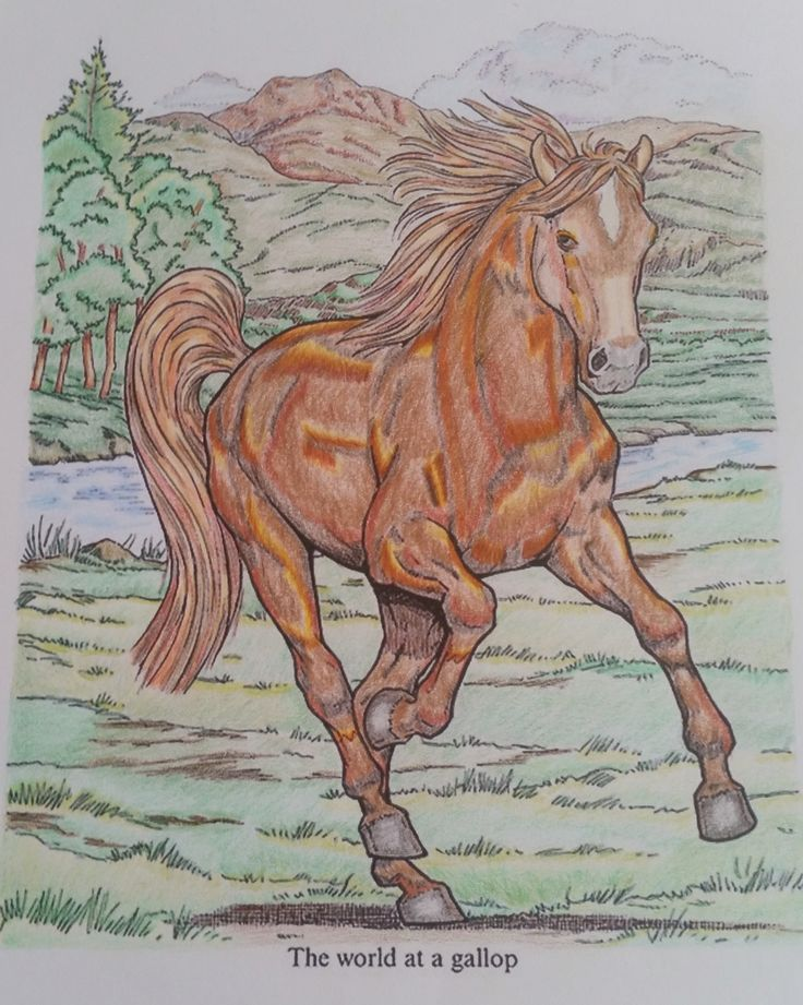 Horse - gallop - Adult coloring