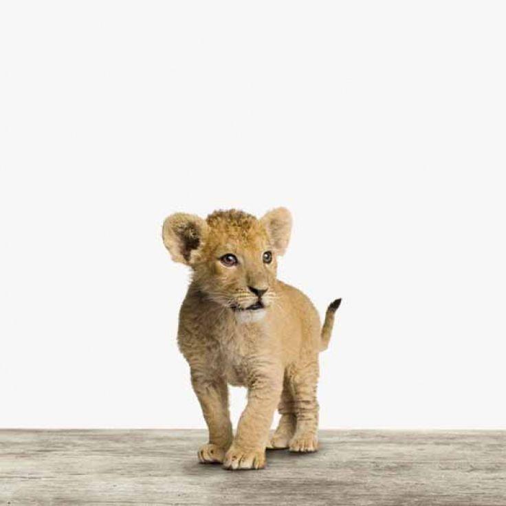 Neugierig, verspielt und auf sieben Materialien erhältlich - der Baby Löwe von ArtyAnimals!