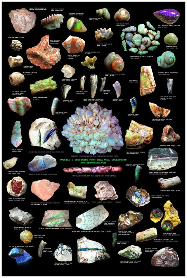Poster of Rare opal fossils