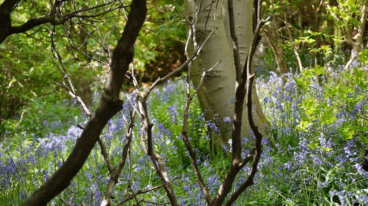 I love to visit Emmets Gardens in spring, perfect place to take photos