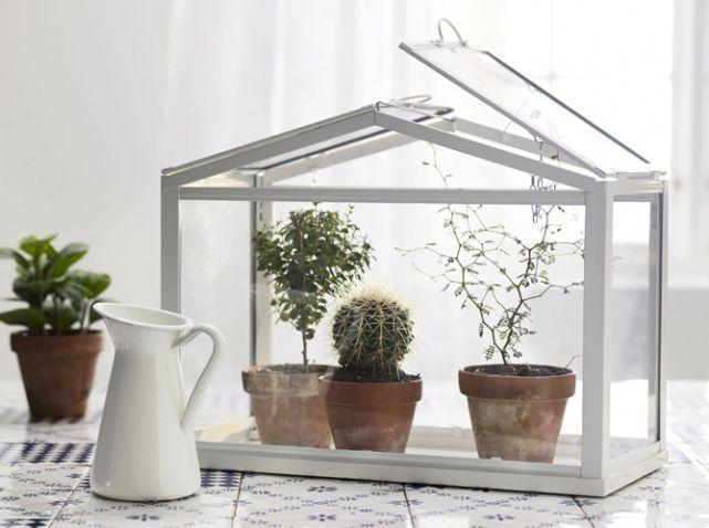 terrariums d couvrez ces mini serres ultra d co diana pinterest terraria plants and. Black Bedroom Furniture Sets. Home Design Ideas
