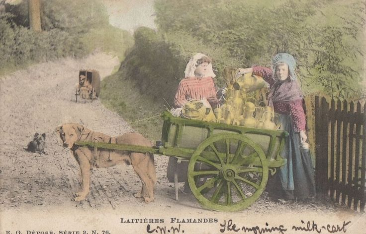 DOG:  Belgian Dog Milk Cart-Laitiere Flamande undivided back-EG