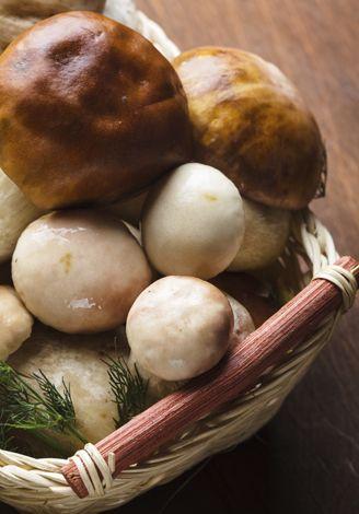 Vino e funghi, gli abbinamenti ideali