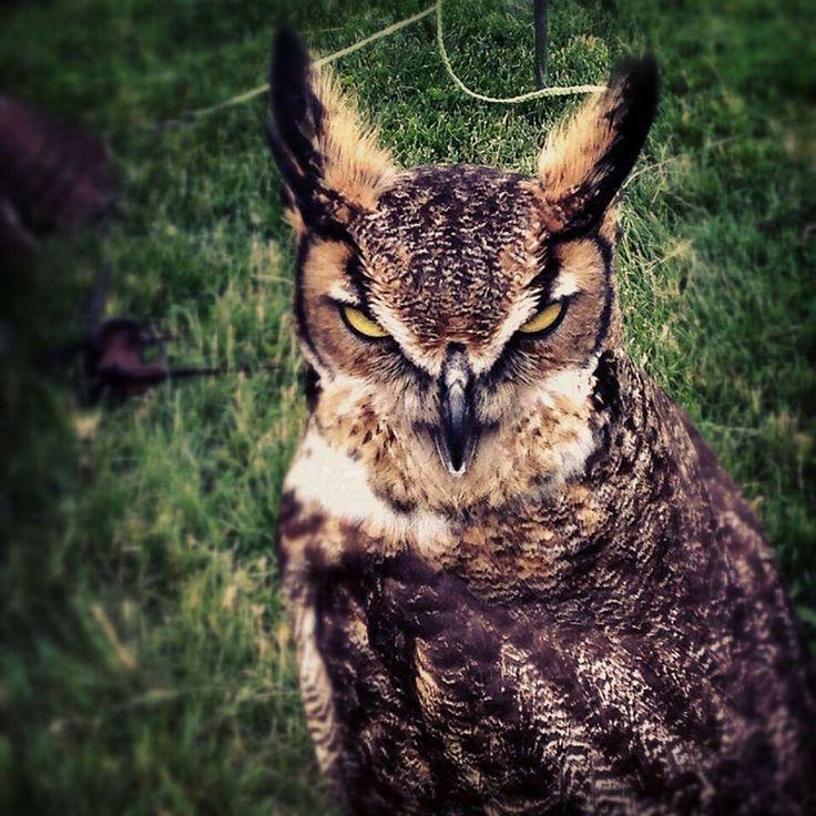 Animales sin ninguna expresión faciales y a pesar de todos son hermosos .....