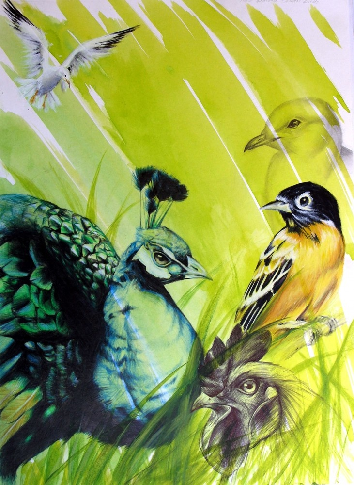 gcse-year 11 sketch book birds. Top in world