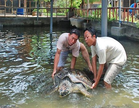 Turtle Island is an exciting to enjoy visiting a small island covered by white sand with turtle conservation located in Tanjung Benoa, South part of Bali. Great adventure Water Sports activities by visiting Turtle Islands