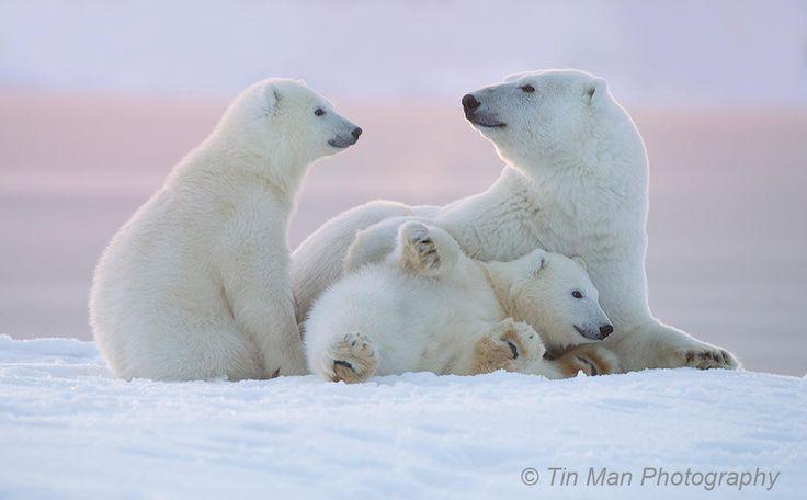 Barter Island, Alaska Arctic. Taken from a boat.  Follow me at facebook: www.facebook.com/TinManPhotography