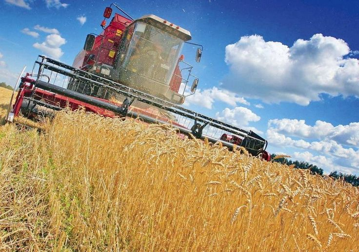MAFIA TRADERILOR DE CEREALE. România este raiul fiscal al marilor traderi de cereale, care raportează pierderi an de an
