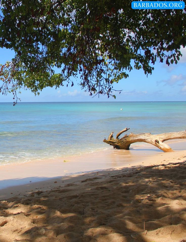 Head north to Smitons Bay on the north-west coast of Barbados for a tranquil escape from the crowds