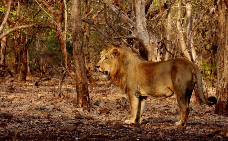 Top 20 wildlife safari getaways of Asia which is home to some of the world's most beautiful and endangered species of fauna and flora. #travel #wildlife #lovewildlife