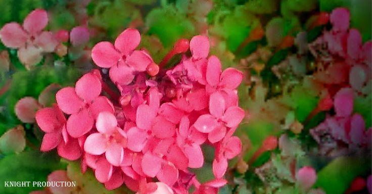 https://flic.kr/p/AQFCUQ | Pink flowers