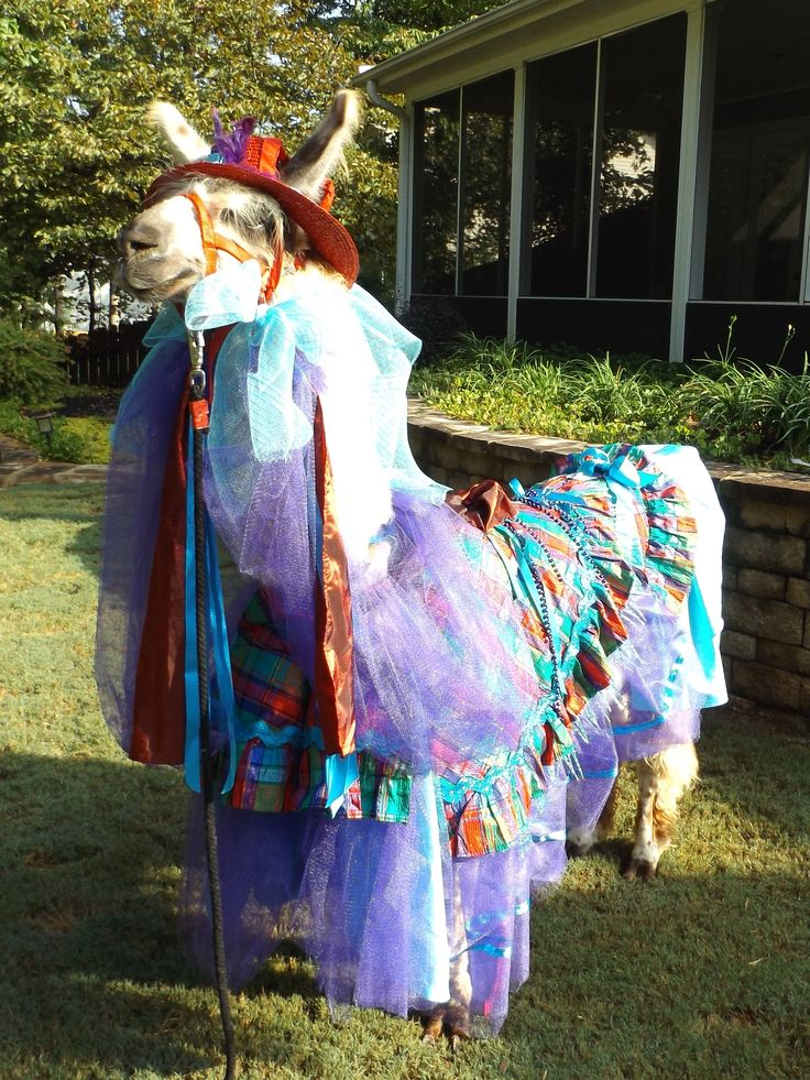 how to make an alpaca costume