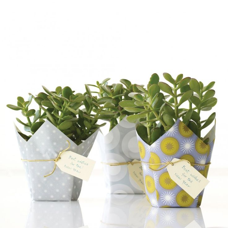 Pretty way to wrap a plant with a simple paperfold of decorative paper