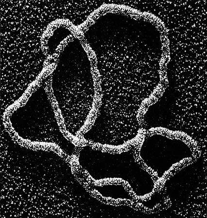 Human dna under microscope