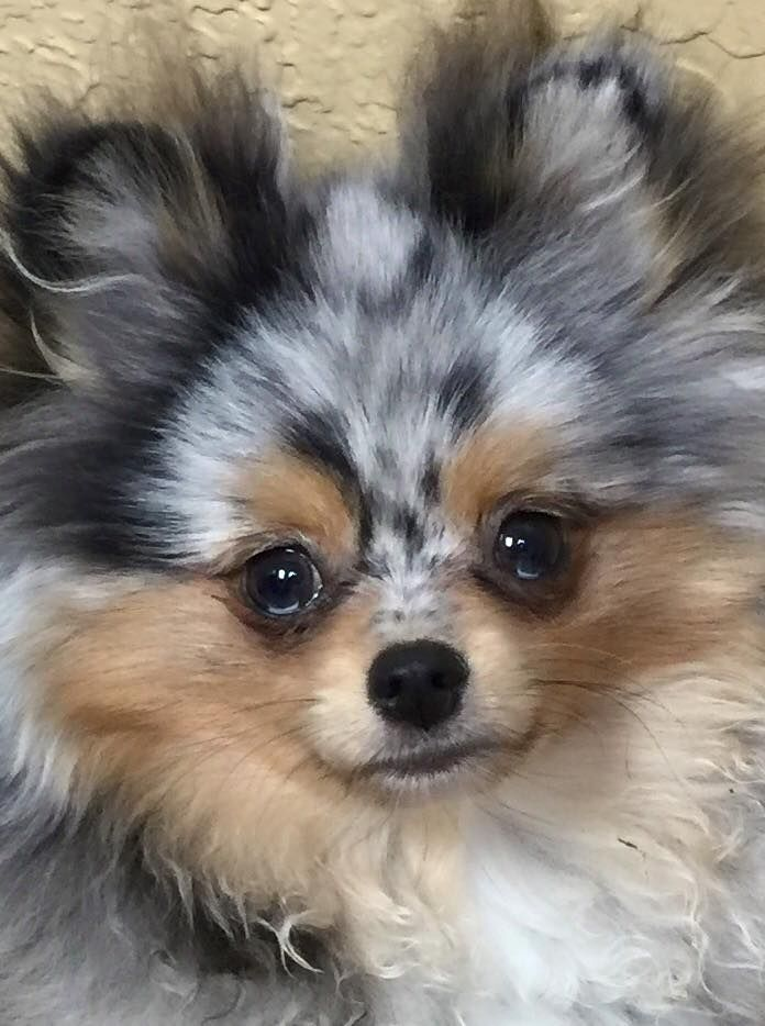Sprout of My Pom Pals - Tap the pin for the most adorable pawtastic fur baby apparel! You'll love the dog clothes and cat clothes! <3