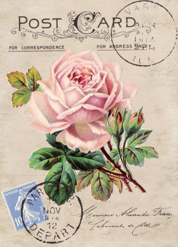 Vintage rose postcard Digital collage p1022 Free to use ♥