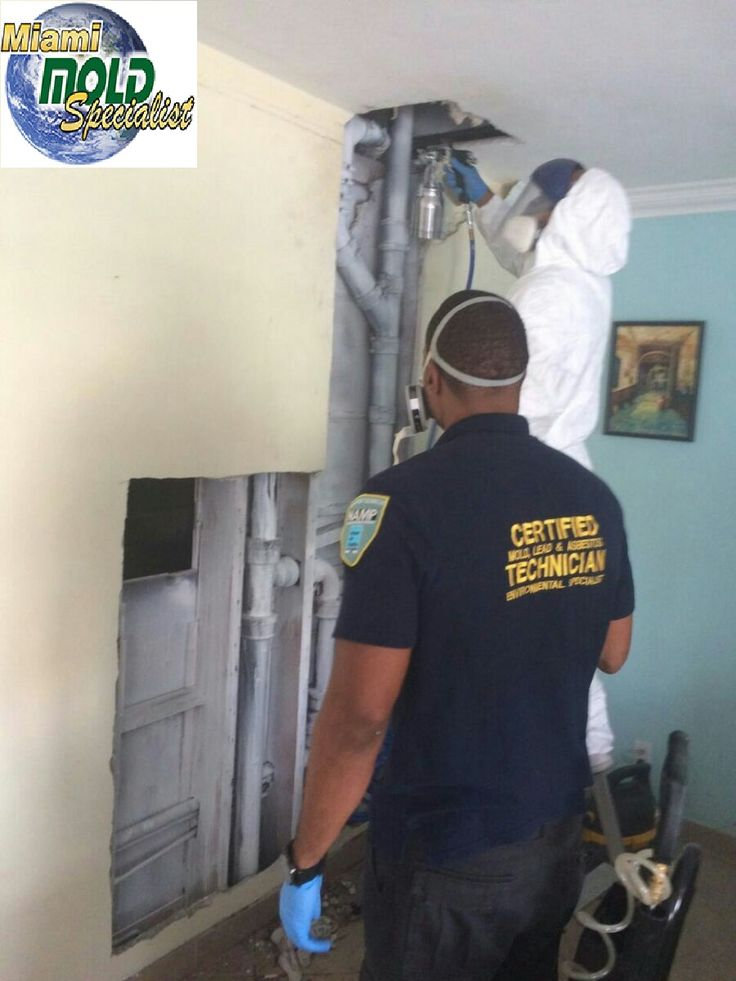 Certified #Mold #Inspectors and mold #removal experts in #MiamiBeach and #FortLauderdale.Call Us To Schedule a State of the Art Miami Beach Mold #Inspection, Mold #Testing, #Water #Damage #Restoration and Mold Removal Service Today! Call- 305-763-8070 http://ow.ly/qr3J305SPl4