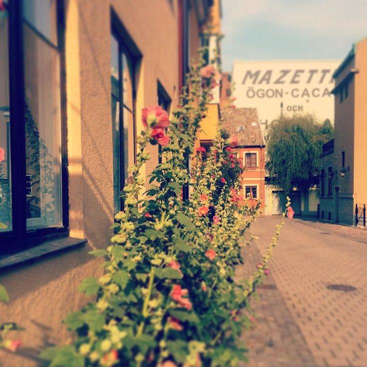 A little piece of Malmö Sweden...  #agnesgatan #visitmalmö #skåne #loves_sweden #loves_europe #streetview #nature #nature_perfection #nature_shooters #allwhatsbeautiful #mymalmö #visitsweden #ig_sweden #igworldquest #igglobalclub #worldbestgram #malmö by saraannelie
