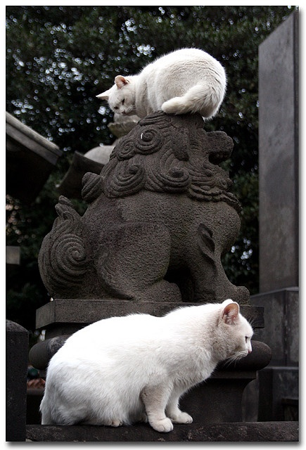 Yanaka Graveyard Cats