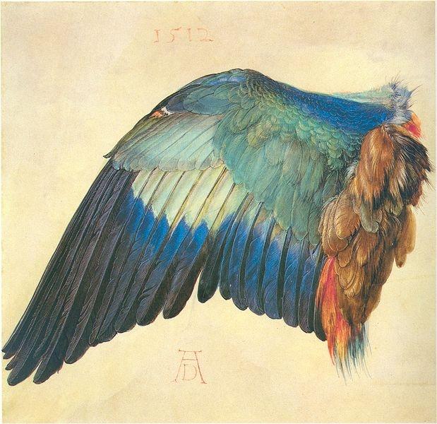 Albrecht Durer- wing of a hooded crow