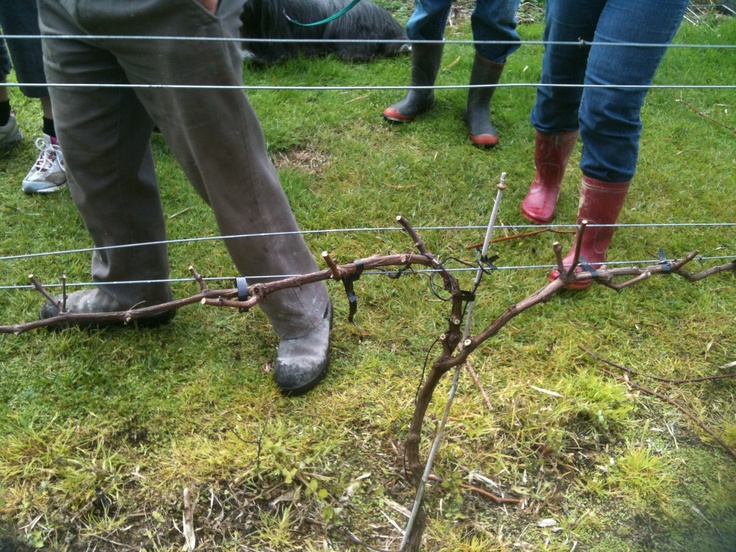 Pruning workshop - time to prune the vines again...love being out in the fresh air :-)