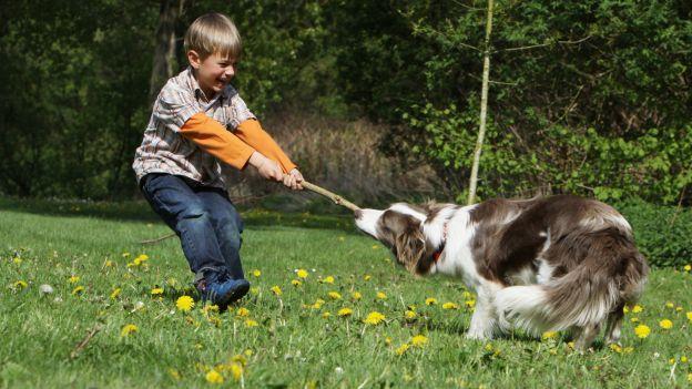 Come scegliere il cane più adatto ai bambini