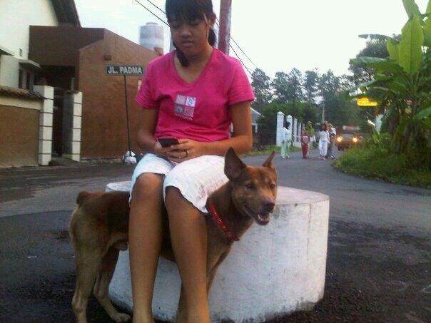 Seno with ay2