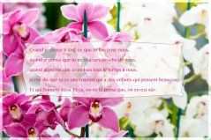 Petits message tendre pour sa maman - cartes virtuelles gratuites - Joliecarte.com