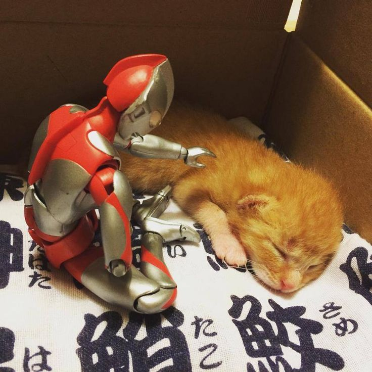 Tumblr: catsbeaversandducks:   When Ultraman isnt fighting bad guys hes also got a softer side willing to stand guard over some of the littlest furriest ones on the planet and protect them as they grow up.  Photos by 紙魚丸 - via Love Meow